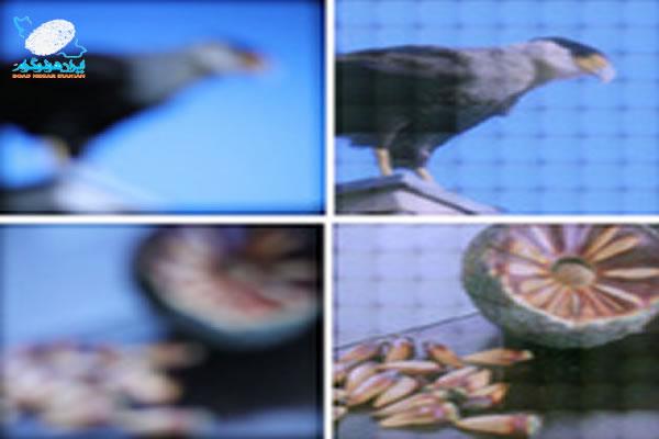 صفحه نمایشی که خود را با وضعیت بینایی منطبق می کند